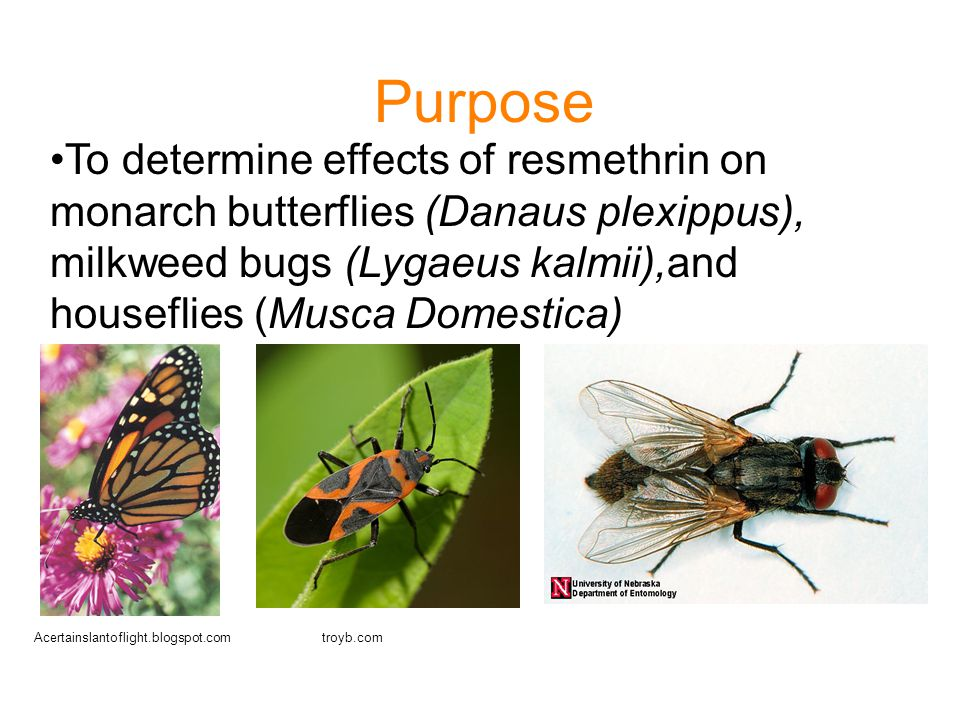 Purpose To determine effects of resmethrin on monarch butterflies (Danaus plexippus), milkweed bugs (Lygaeus kalmii),and houseflies (Musca Domestica)