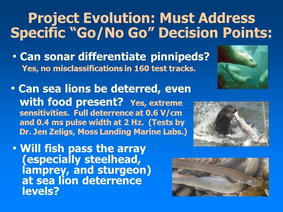 Project Evolution: Must Address Specific Go/No Go Decision Points: Can sonar differentiate pinnipeds.