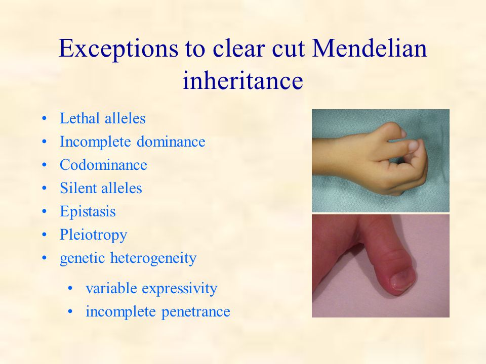 Exceptions to clear cut Mendelian inheritance Lethal alleles Incomplete dominance Codominance Silent alleles Epistasis Pleiotropy genetic heterogeneity variable expressivity incomplete penetrance