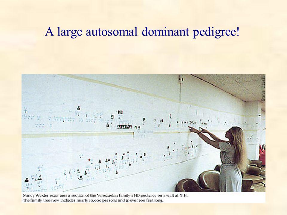 A large autosomal dominant pedigree!