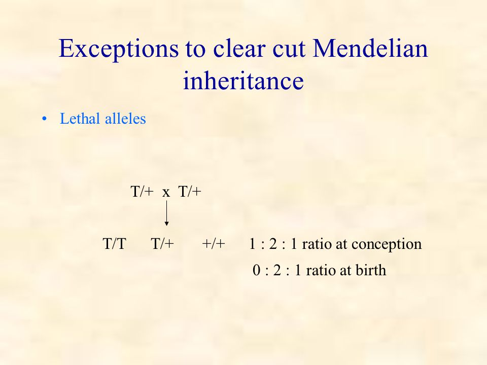 Exceptions to clear cut Mendelian inheritance Lethal alleles T/+ x T/+ T/T T/+ +/+1 : 2 : 1 ratio at conception 0 : 2 : 1 ratio at birth