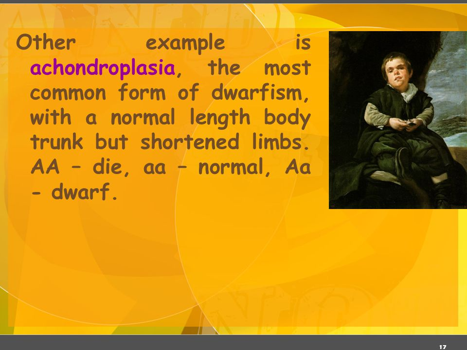17 Other example is achondroplasia, the most common form of dwarfism, with a normal length body trunk but shortened limbs. AA – die, aa – normal, Aa -