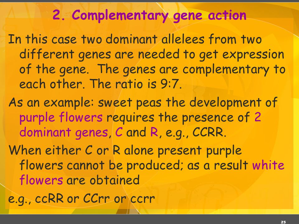 25 2. Complementary gene action In this case two dominant allelees from two different genes are needed to get expression of the gene. The genes are co