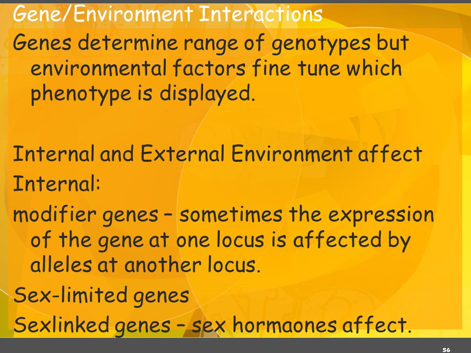 56 Gene/Environment Interactions Genes determine range of genotypes but environmental factors fine tune which phenotype is displayed. Internal and Ext