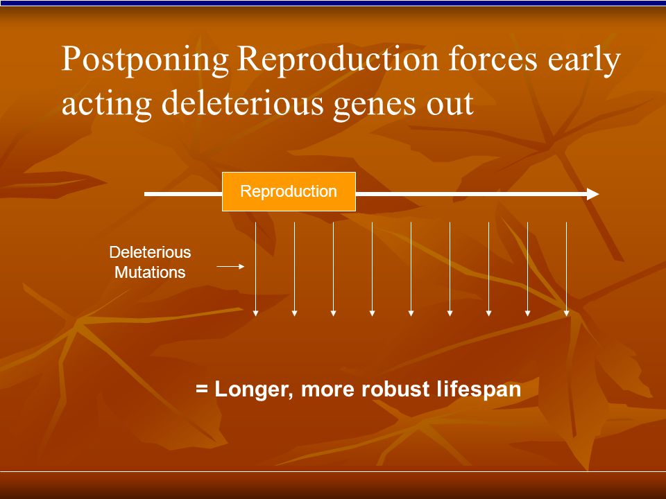 Reproduction Deleterious Mutations = Longer, more robust lifespan Postponing Reproduction forces early acting deleterious genes out