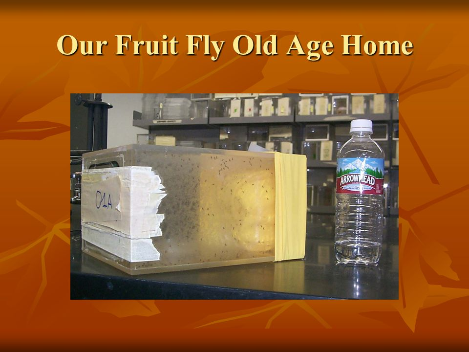 Our Fruit Fly Old Age Home