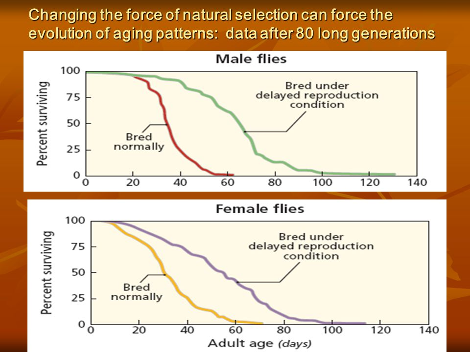 Changing the force of natural selection can force the evolution of aging patterns: data after 80 long generations