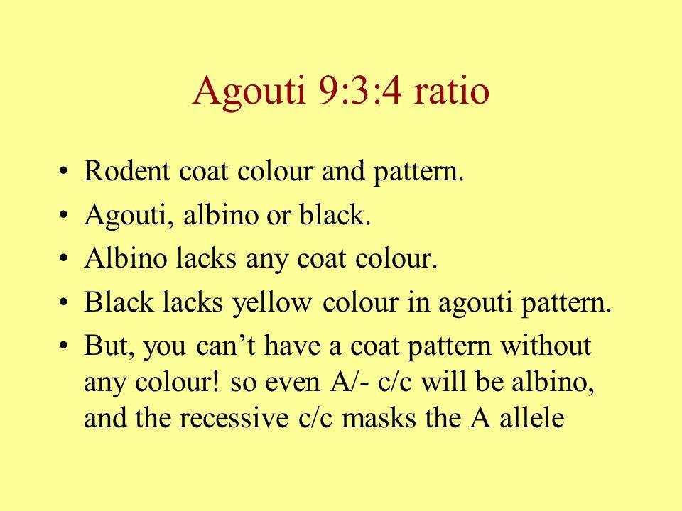 Agouti 9:3:4 ratio Rodent coat colour and pattern. Agouti, albino or black. Albino lacks any coat colour. Black lacks yellow colour in agouti pattern.