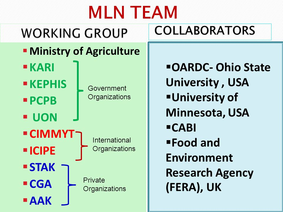 COLLABORATORS  Ministry of Agriculture  KARI  KEPHIS  PCPB  UON  CIMMYT  ICIPE  STAK  CGA  AAK  OARDC- Ohio State University, USA  University of Minnesota, USA  CABI  Food and Environment Research Agency (FERA), UK MLN TEAM Government Organizations International Organizations Private Organizations