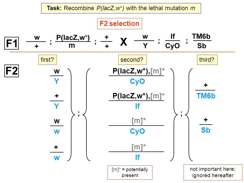 ++ m P(lacZ,w + ),[m]* CyO P(lacZ,w + ),[m]* If [m]* CyO [m]* If [m]* = potentially present F2 selection F2 ; w Y + Y w w + w + TM6b + Sb ; not import