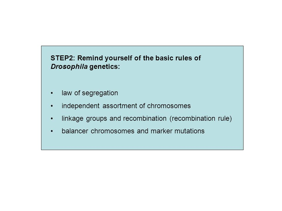 Law of segregation / linkage groups Homologous chromosmes are separated during meiosis