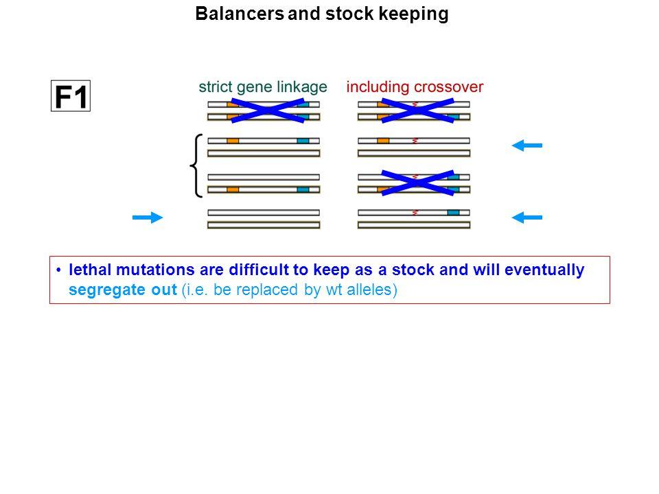 remedy in Drosophila: balancer chromosomes Balancers and stock keeping