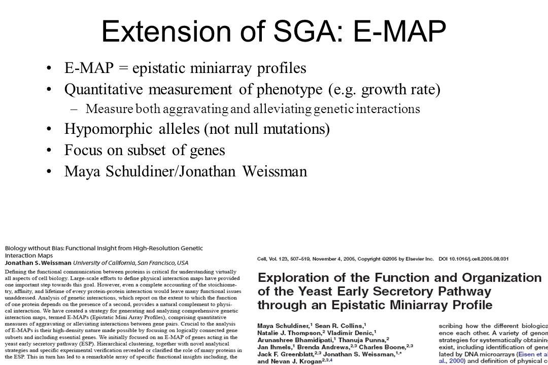Extension of SGA: E-MAP E-MAP = epistatic miniarray profiles Quantitative measurement of phenotype (e.g. growth rate) –Measure both aggravating and al