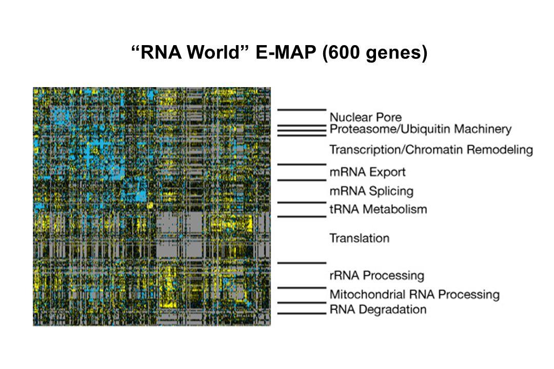 """RNA World"" E-MAP (600 genes)"