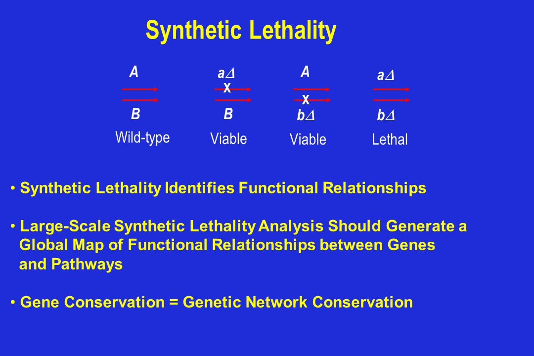 Synthetic Lethality A B aa B X A bb Viable Lethal aa bb Wild-type Viable X Synthetic Lethality Identifies Functional Relationships Large-Scale