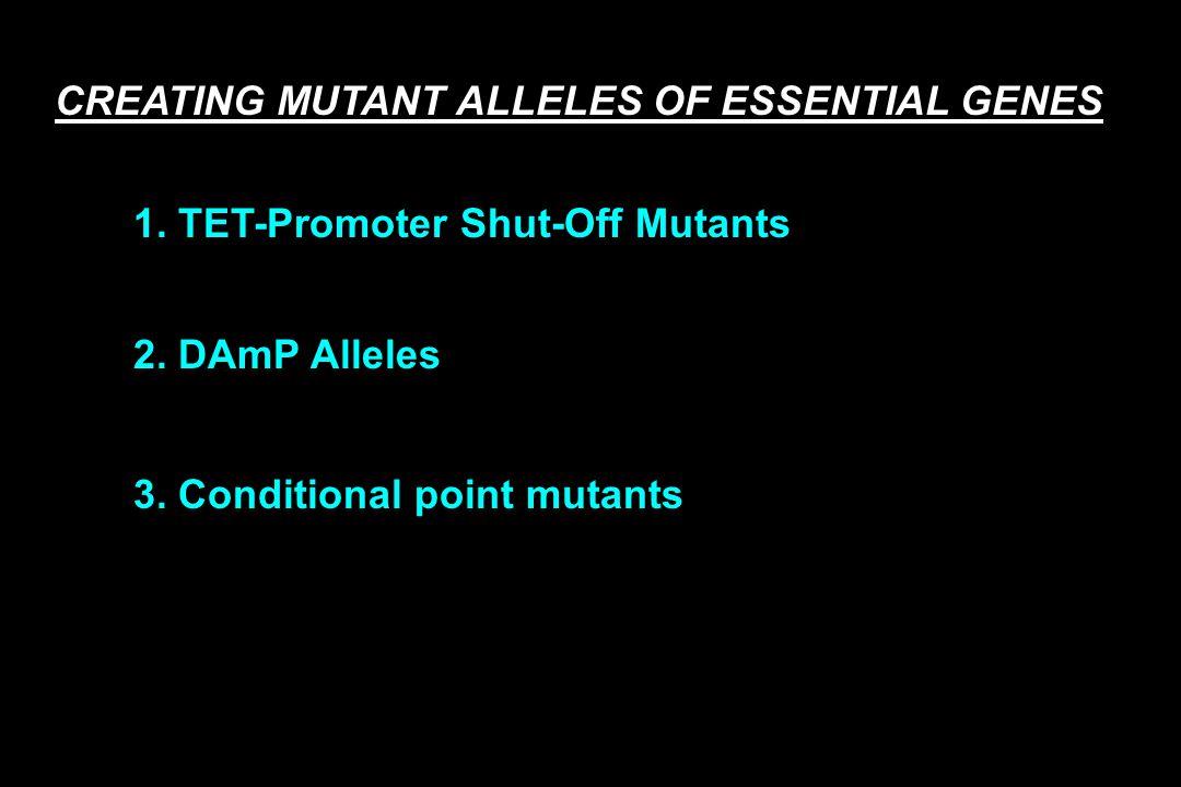 3. Conditional point mutants CREATING MUTANT ALLELES OF ESSENTIAL GENES 1. TET-Promoter Shut-Off Mutants 2. DAmP Alleles
