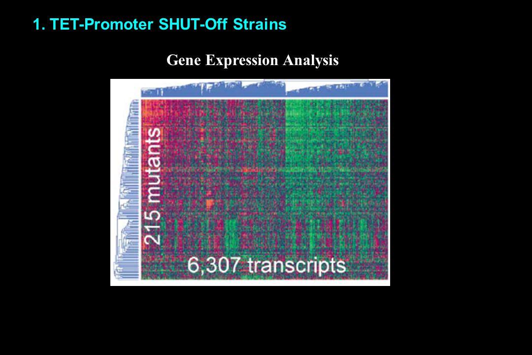 1. TET-Promoter SHUT-Off Strains Gene Expression Analysis