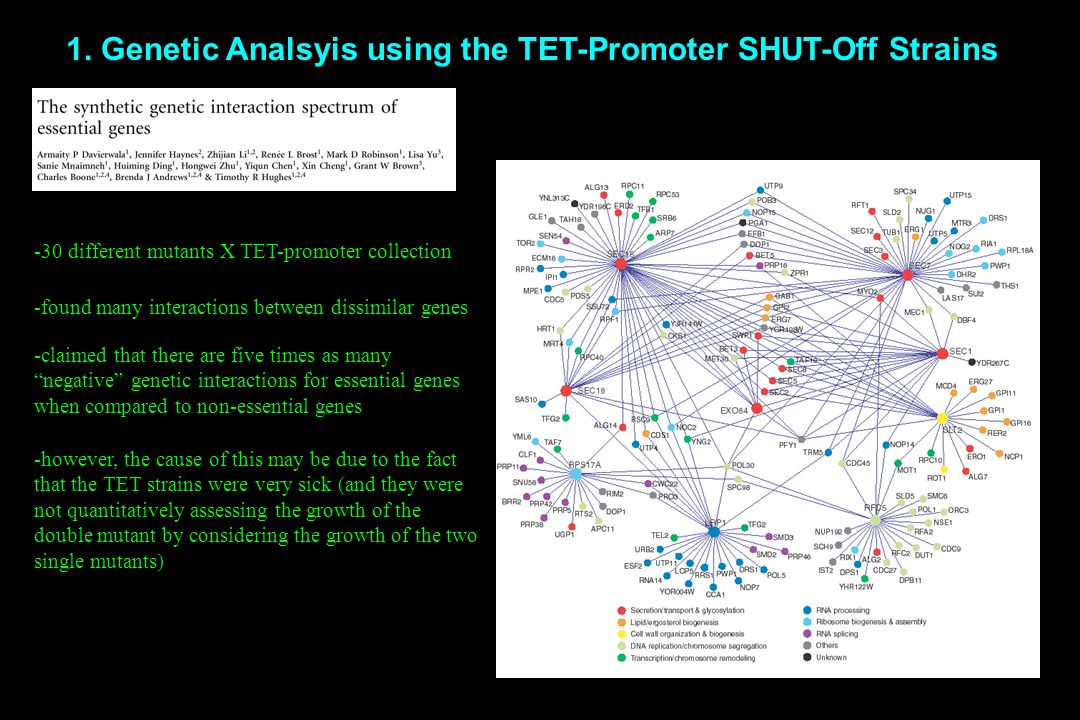 1. Genetic Analsyis using the TET-Promoter SHUT-Off Strains -30 different mutants X TET-promoter collection -found many interactions between dissimila