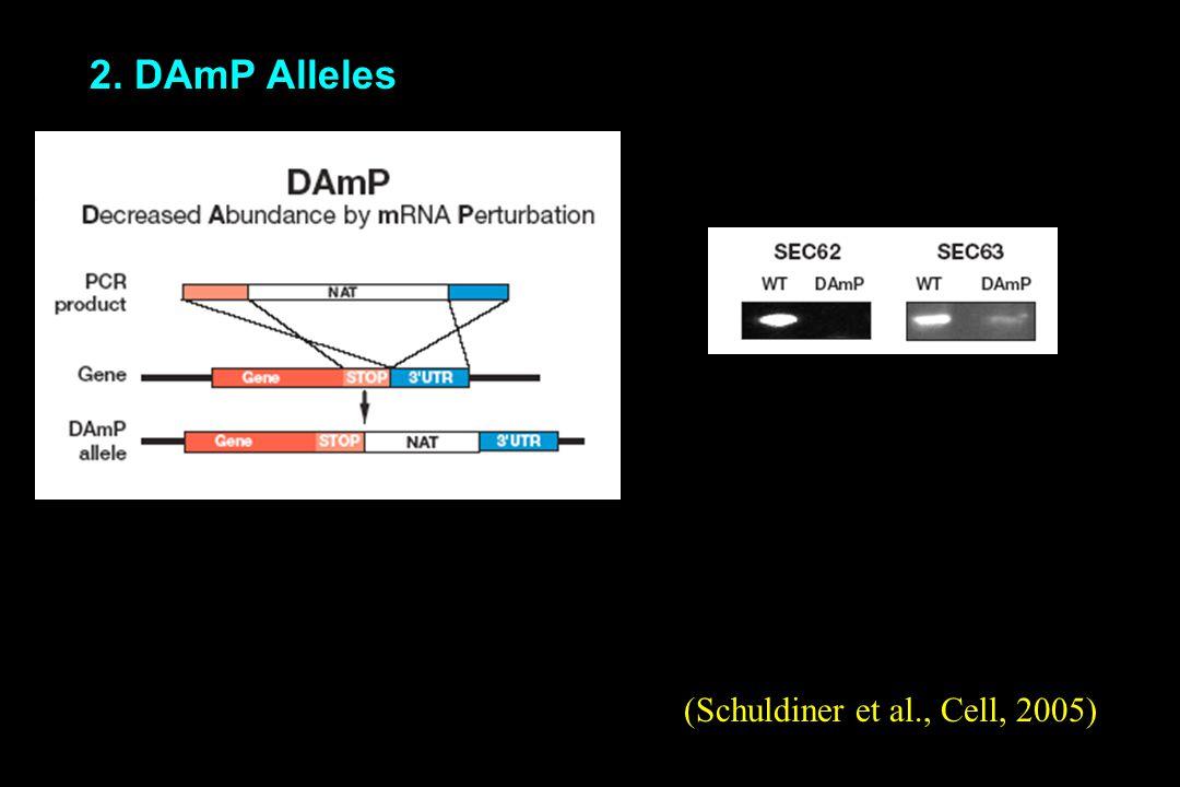 2. DAmP Alleles (Schuldiner et al., Cell, 2005)