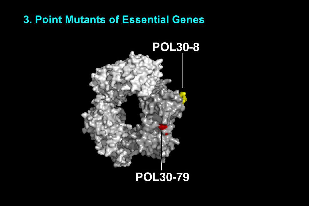 3. Point Mutants of Essential Genes