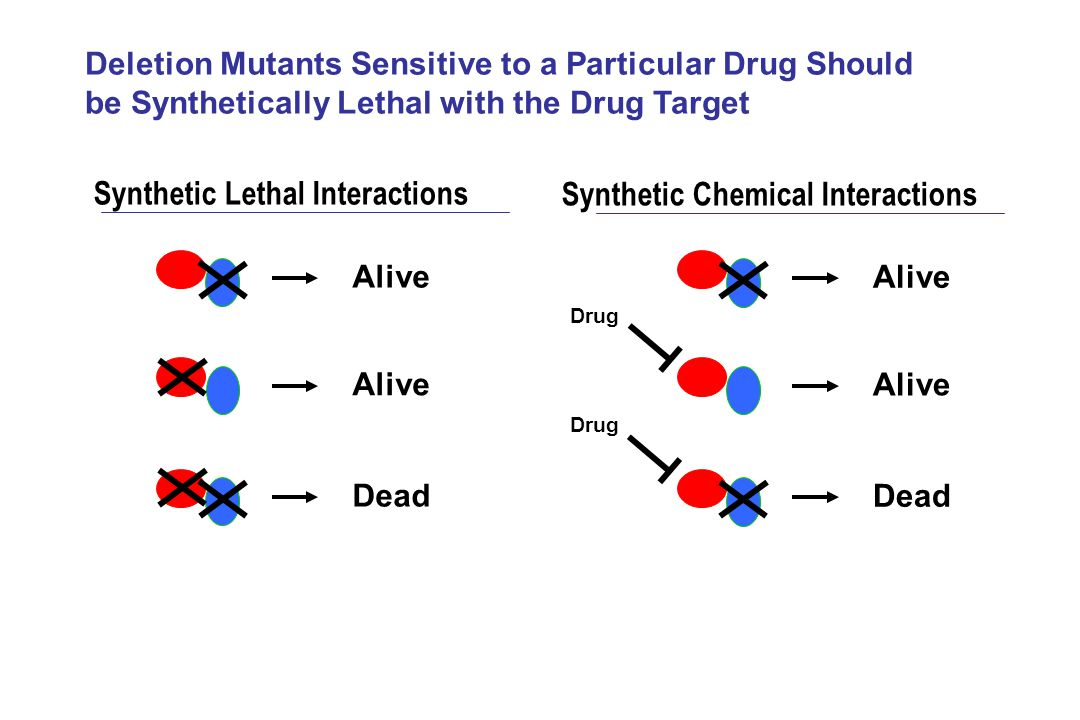 Alive Dead Alive Dead Synthetic Lethal Interactions Synthetic Chemical Interactions Deletion Mutants Sensitive to a Particular Drug Should be Syntheti