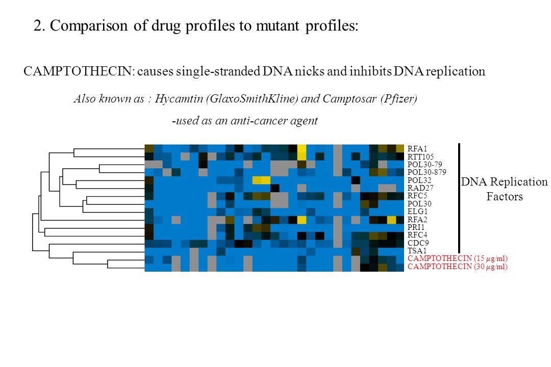 RFA1 RTT105 POL30-79 POL30-879 POL32 RAD27 RFC5 POL30 ELG1 RFA2 PRI1 RFC4 CDC9 TSA1 CAMPTOTHECIN (15  g/ml) CAMPTOTHECIN (30  g/ml) DNA Replication