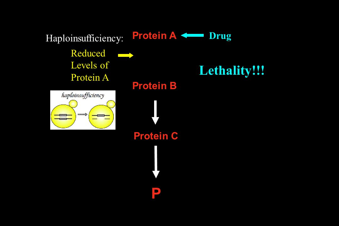 Protein A P Protein B Protein C Reduced Levels of Protein A Haploinsufficiency: Drug Lethality!!!