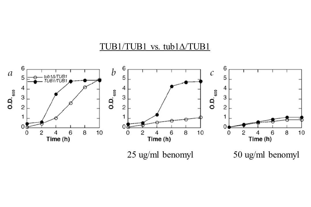 TUB1/TUB1 vs. tub1  /TUB1 25 ug/ml benomyl50 ug/ml benomyl