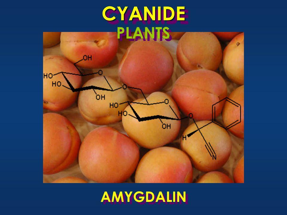 AMYGDALIN CYANIDECYANIDE PLANTS