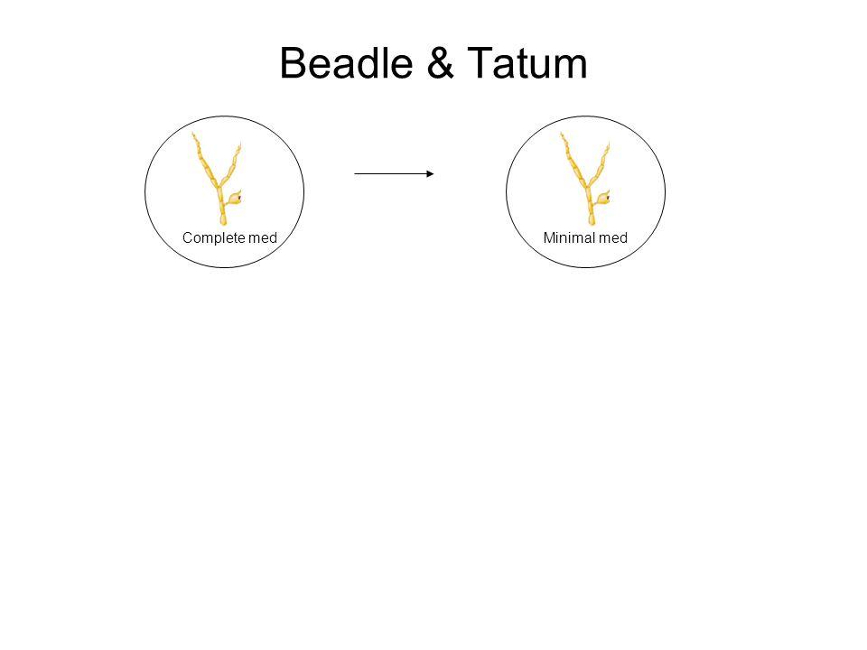 Beadle & Tatum Complete medMinimal med