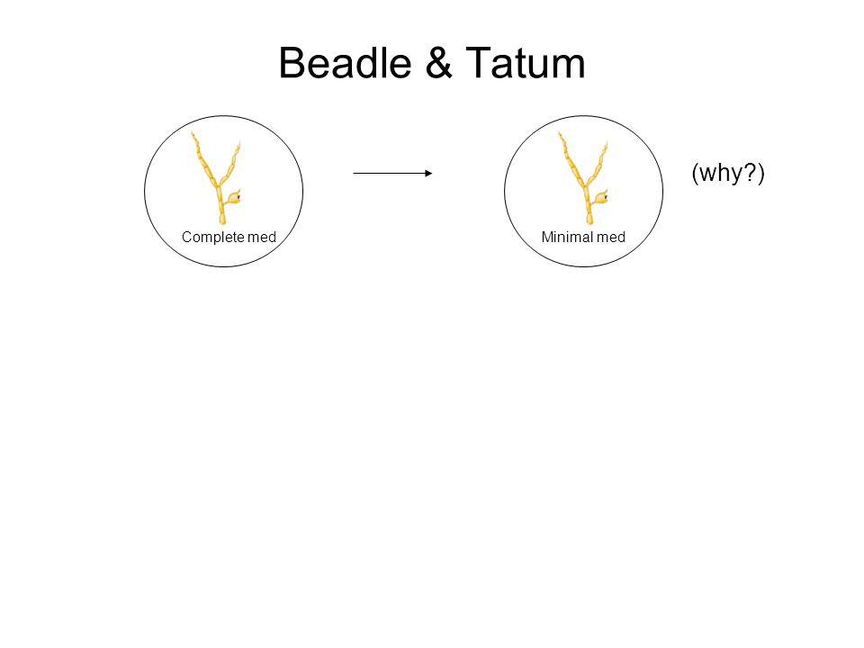 Beadle & Tatum Complete medMinimal med (why?)
