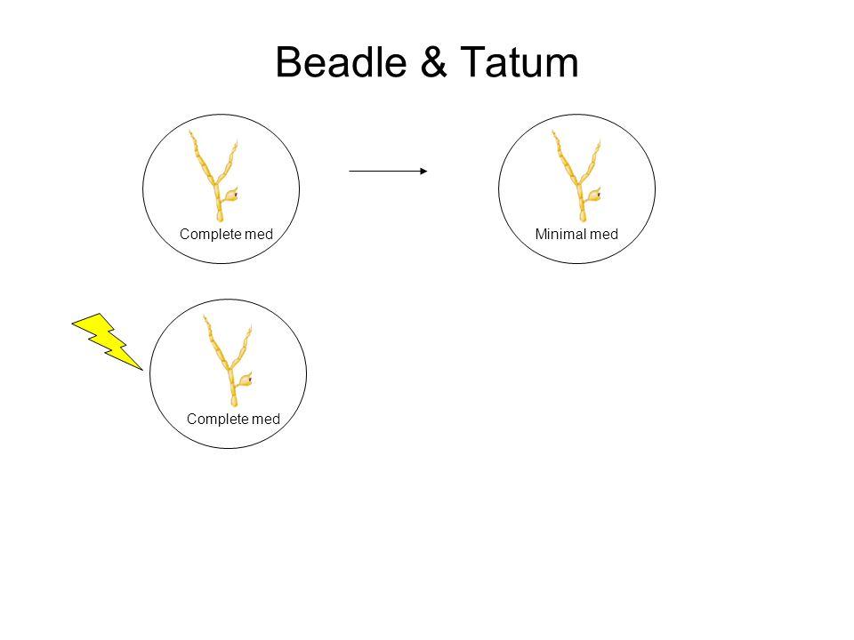 Beadle & Tatum Complete medMinimal med Complete med