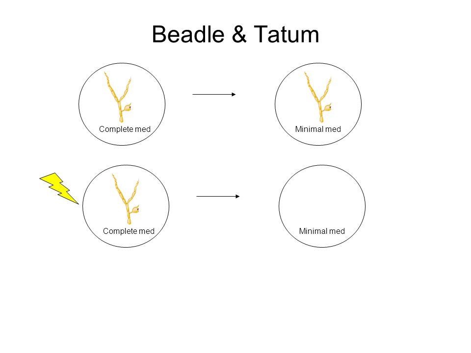 Beadle & Tatum Complete medMinimal med Complete medMinimal med