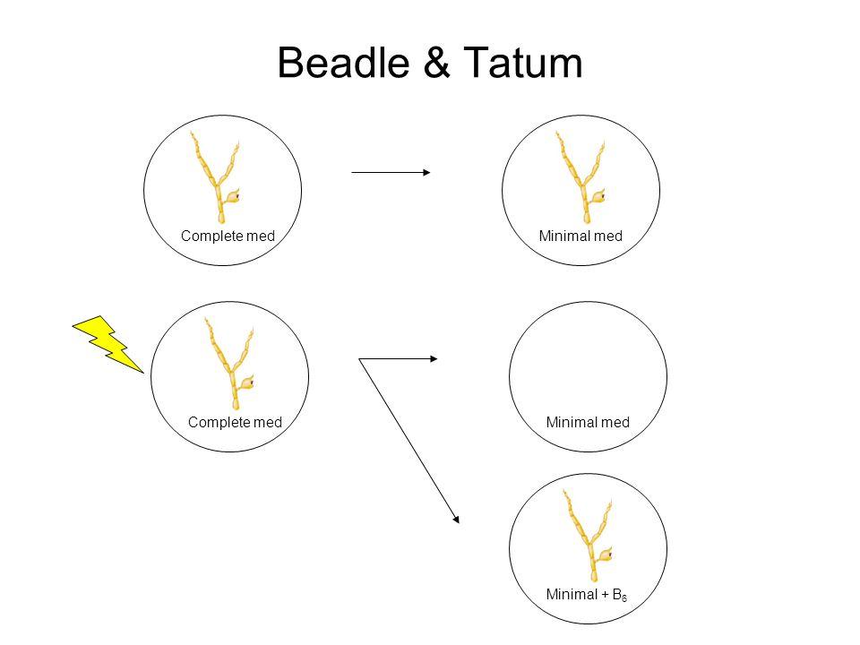 Beadle & Tatum Complete medMinimal med Complete medMinimal med Minimal + B 6