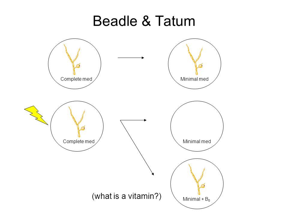 Beadle & Tatum Complete medMinimal med Complete medMinimal med Minimal + B 6 (what is a vitamin?)