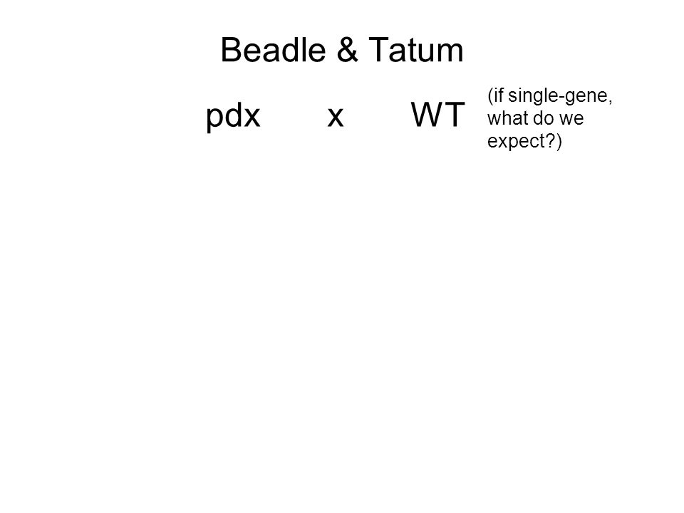 Beadle & Tatum pdx xWT (if single-gene, what do we expect )
