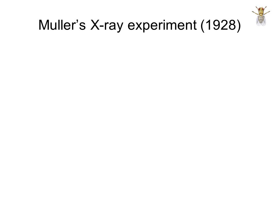 Muller's X-ray experiment (1928)
