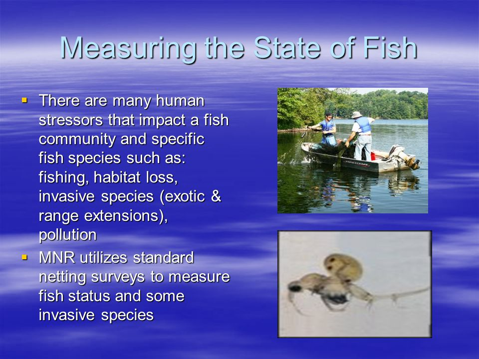 Measuring the State of Fish  Other surveys are carried out to measure the stressors such as: –Creel surveys to measure fishing pressure –Water testing to measure pollution, chemical habitat availability (O2, temp, N, P etc.) and invasive species –Physical habitat mapping to identify spawning & nursery limitations/opportunities