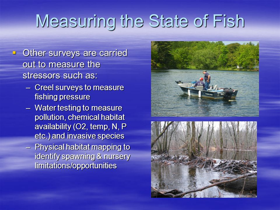 Measuring the State of Fish: Creel [Fish] Surveys How to conduct a roving creel survey On randomly chosen sample day: 1.Boat around the lake [basin] and count boats that are fishing, don't stop to interview during counts, should complete in 30-50 minutes 2.Interview as many fishing boats as possible.