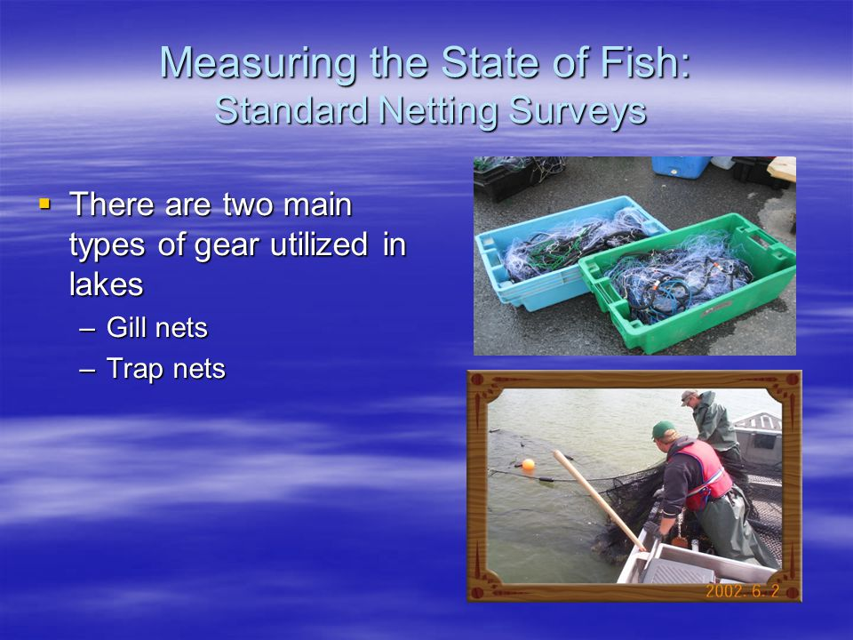Measuring the State of Fish: Standard Netting Surveys  There are two main types of gear utilized in lakes –Gill nets –Trap nets