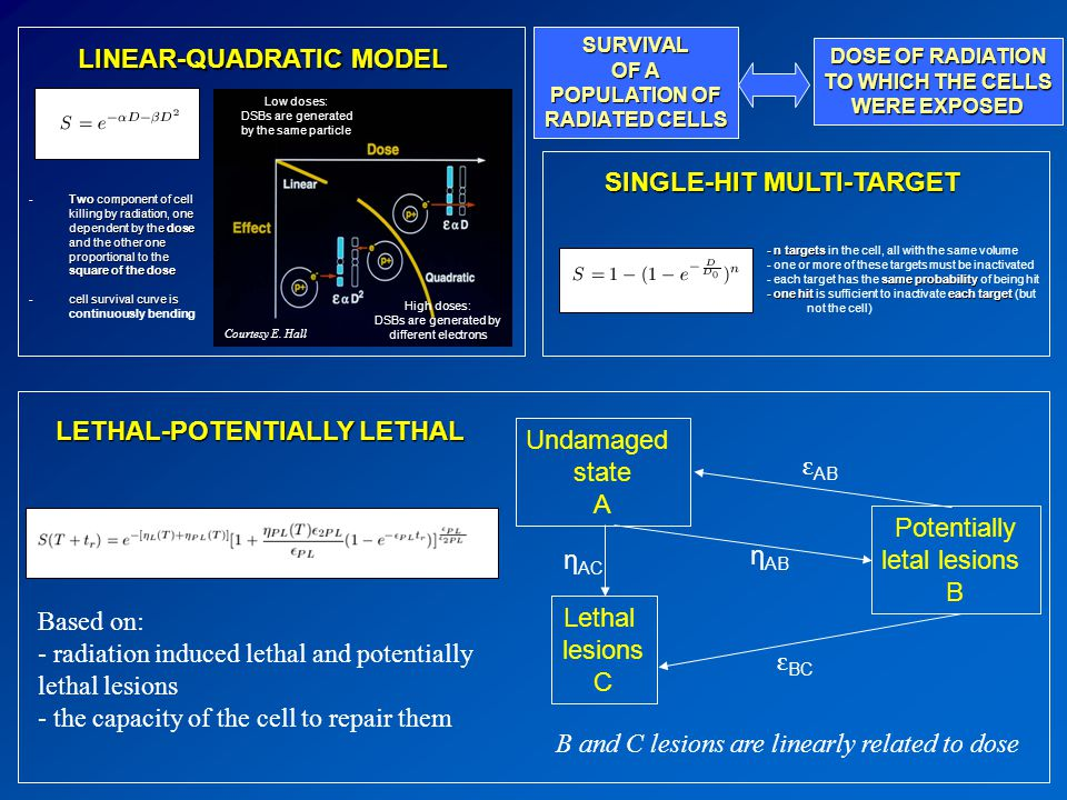 LINEAR-QUADRATIC MODEL LETHAL-POTENTIALLY LETHAL SINGLE-HIT MULTI-TARGET Low doses: DSBs are generated by the same particle High doses: DSBs are generated by different electrons Undamaged state A Lethal lesions C Potentially letal lesions B η AC η AB ε BC ε AB Based on: - radiation induced lethal and potentially lethal lesions - the capacity of the cell to repair them B and C lesions are linearly related to dose SURVIVAL OF A POPULATION OF RADIATED CELLS DOSE OF RADIATION TO WHICH THE CELLS WERE EXPOSED Courtesy E.