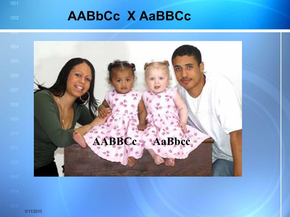 AABbCc X AaBBCc 5/11/2015 AABBCcAaBbcc