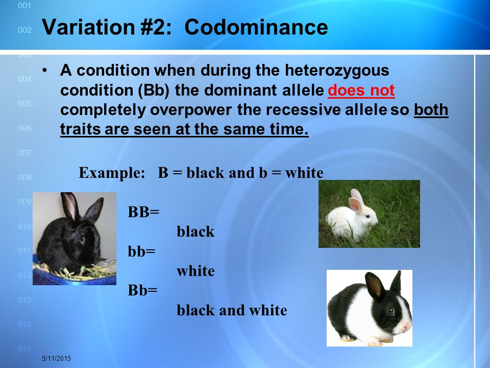 Variation #2: Codominance A condition when during the heterozygous condition (Bb) the dominant allele does not completely overpower the recessive alle