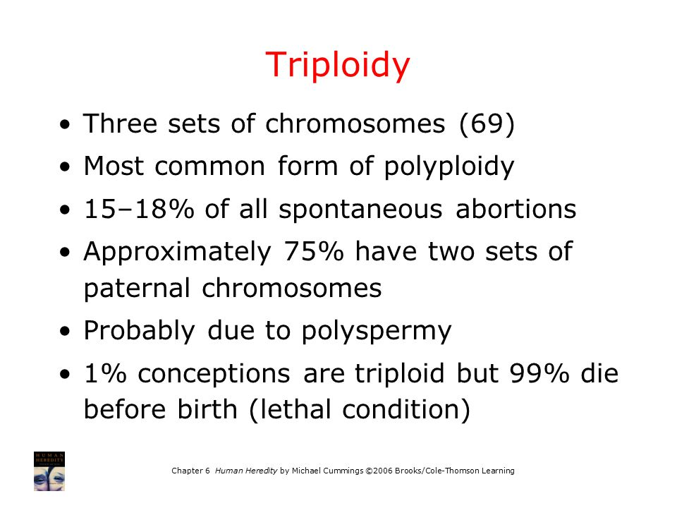 Chapter 6 Human Heredity by Michael Cummings ©2006 Brooks/Cole-Thomson Learning Triploidy Three sets of chromosomes (69) Most common form of polyploid