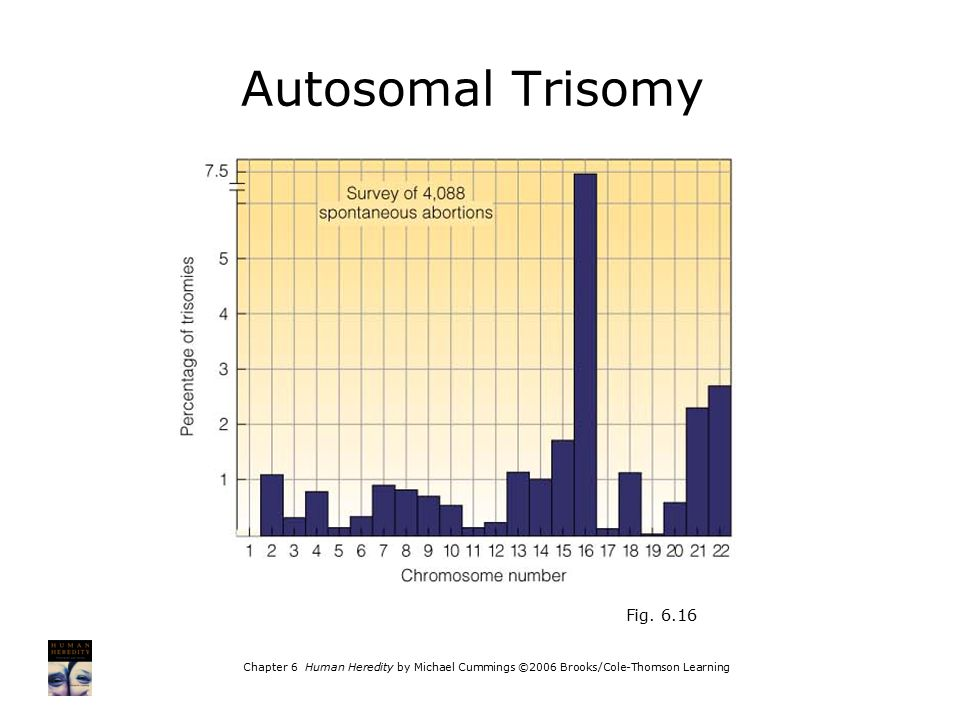Chapter 6 Human Heredity by Michael Cummings ©2006 Brooks/Cole-Thomson Learning Fig. 6.16 Autosomal Trisomy