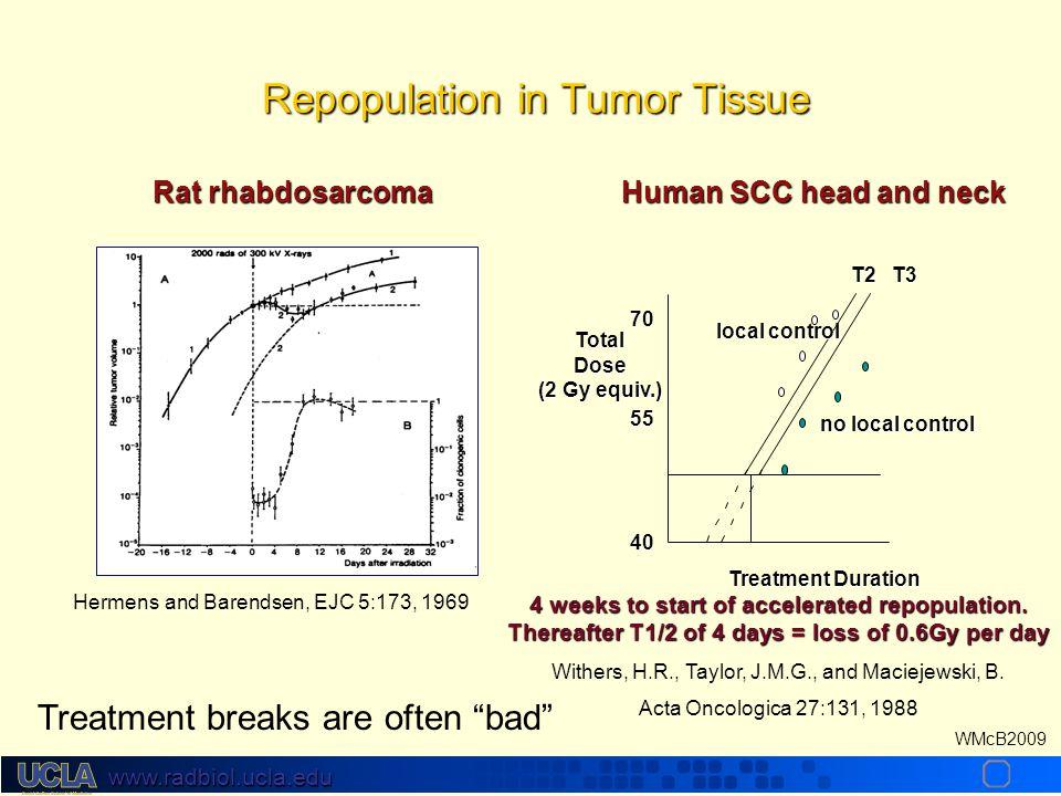 www.radbiol.ucla.edu WMcB2009 Regeneration in Normal Tissues The lag time to regeneration varies with the tissueThe lag time to regeneration varies wi