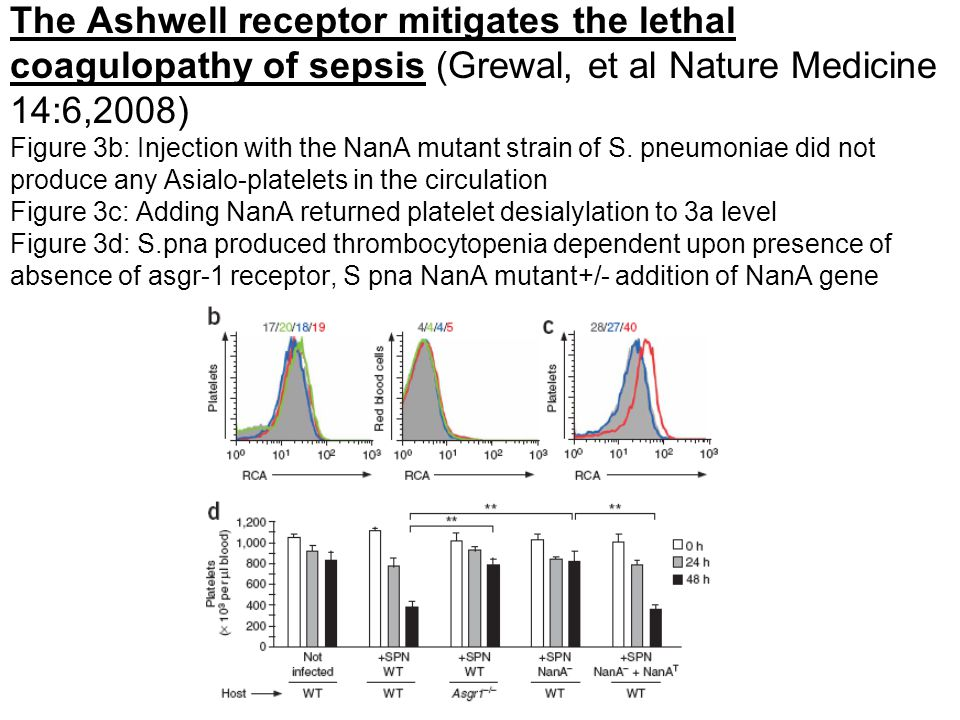 The Ashwell receptor mitigates the lethal coagulopathy of sepsis (Grewal, et al Nature Medicine 14:6,2008) Figure 3b: Injection with the NanA mutant strain of S.