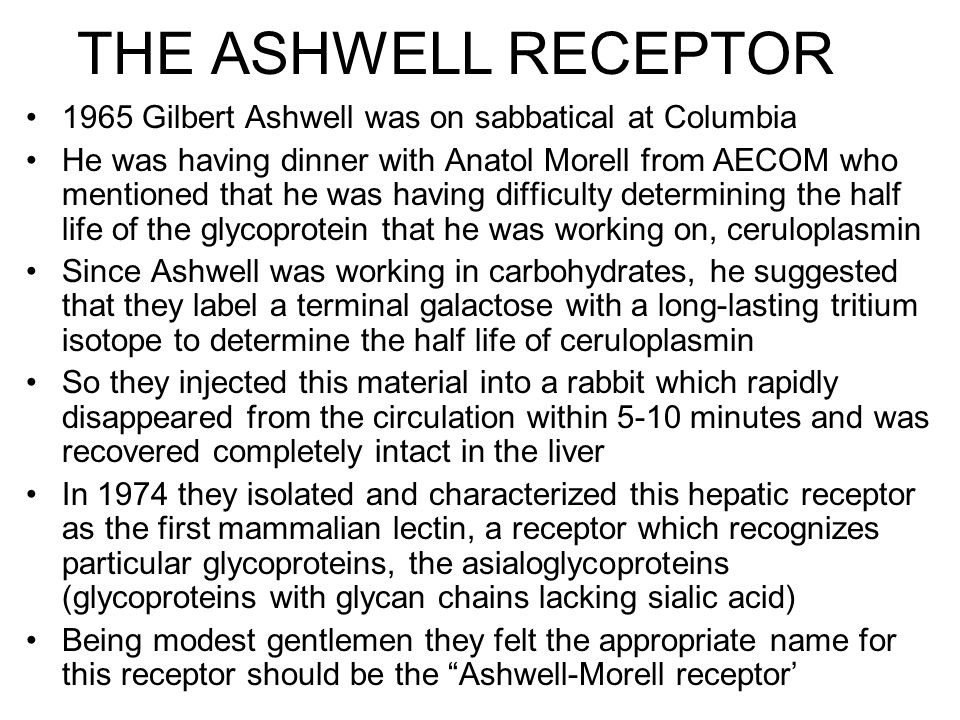 THE ASHWELL RECEPTOR 1965 Gilbert Ashwell was on sabbatical at Columbia He was having dinner with Anatol Morell from AECOM who mentioned that he was having difficulty determining the half life of the glycoprotein that he was working on, ceruloplasmin Since Ashwell was working in carbohydrates, he suggested that they label a terminal galactose with a long-lasting tritium isotope to determine the half life of ceruloplasmin So they injected this material into a rabbit which rapidly disappeared from the circulation within 5-10 minutes and was recovered completely intact in the liver In 1974 they isolated and characterized this hepatic receptor as the first mammalian lectin, a receptor which recognizes particular glycoproteins, the asialoglycoproteins (glycoproteins with glycan chains lacking sialic acid) Being modest gentlemen they felt the appropriate name for this receptor should be the Ashwell-Morell receptor'