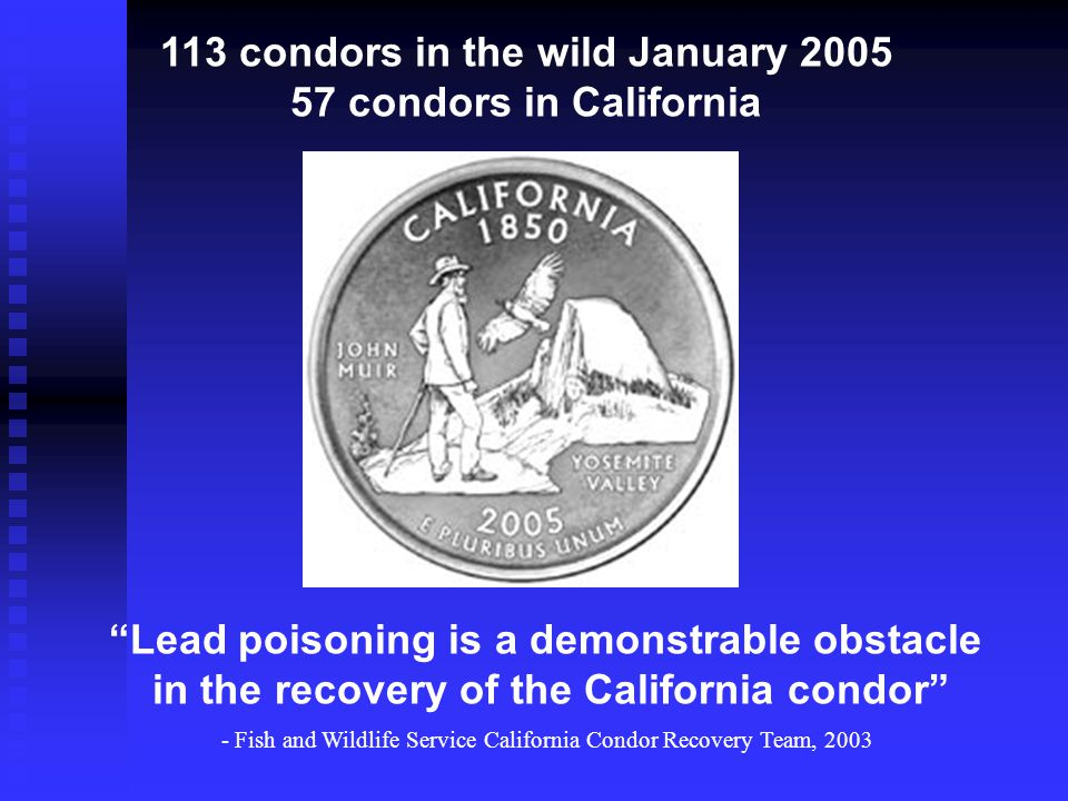Sources of lead Avian scavengers eat lead-tainted carcasses, gut piles, and wounded prey species with fragments of lead in their bodies Avian scavengers eat lead-tainted carcasses, gut piles, and wounded prey species with fragments of lead in their bodies Unequivocal evidence that condors, bald eagles, and golden eagles experience highly elevated blood lead levels as a result of ingesting ammunition from carcasses Unequivocal evidence that condors, bald eagles, and golden eagles experience highly elevated blood lead levels as a result of ingesting ammunition from carcasses Fish and Game Report (Fry 2003) evaluated and dismissed tainted food subsidy, atmospheric deposition, or soil residues as lead exposure sources Fish and Game Report (Fry 2003) evaluated and dismissed tainted food subsidy, atmospheric deposition, or soil residues as lead exposure sources