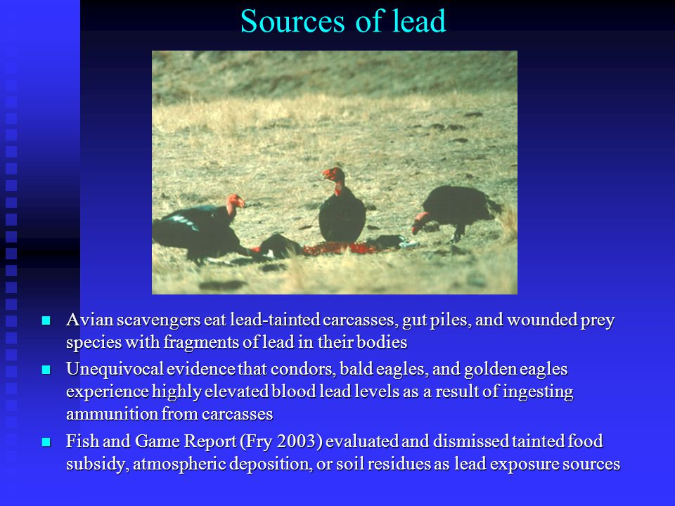 Toxic Effects of Lead on Condors Death - acute toxicity >1 ppm Die slowly of starvation – gastro-intestinal paralysis Sub-lethal toxicity – neurological problems, impaired vision and motor coordination